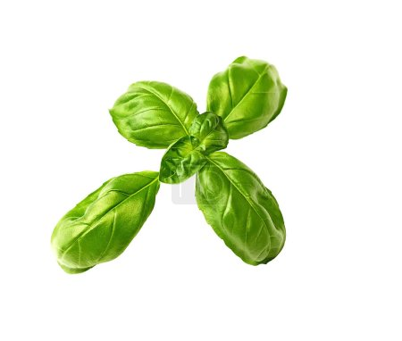 Photo for Fresh green basil leaves isolated on white background - Royalty Free Image