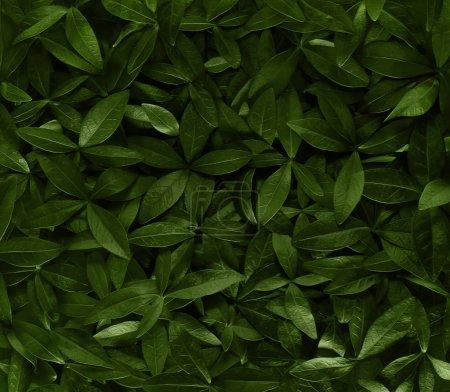 Photo pour Fond abstrait de feuilles vertes - image libre de droit