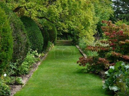 Photo pour Pelouse verte dans le jardin d'été - image libre de droit