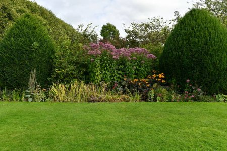 Photo for Green lawn in summer garden - Royalty Free Image