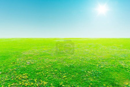 Green field under blue sky with sun flare .