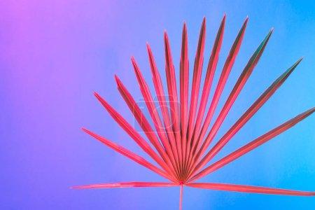 Foto de Árbol tropical en colores vibrantes neón holográfico gradiente audaz, arte conceptual, antecedentes del surrealismo mínimo - Imagen libre de derechos