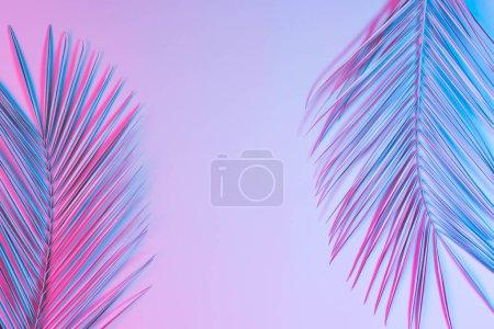 """Photo pour Feuilles de palmier dans des couleurs vibrantes """"BOLD"""" gradient holographique néon, Concept art - image libre de droit"""