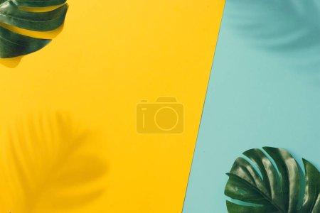 Photo pour Deux feuilles de palmier vert sur fond coloré, Minimal concept exotique été - image libre de droit