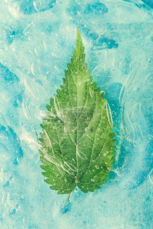Green natural leaf in water or cold drink. Healty food concept. Minimal nature background. Flat lay.