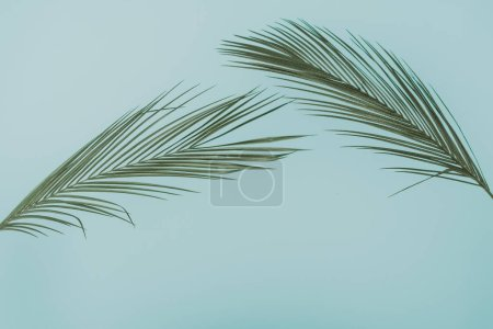 Photo for Tropical palm leaves on pastel blue background. minimal concept - Royalty Free Image
