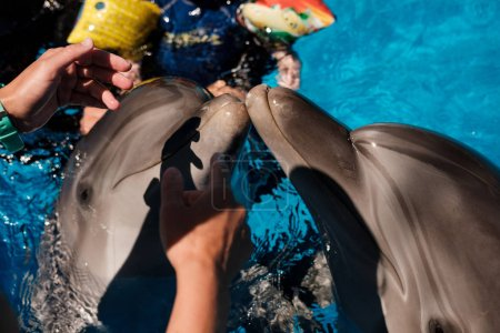 people with bottlenose dolphins  in pool
