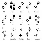 Wildlife animals reptiles and birds footprint animal paw prints vector set