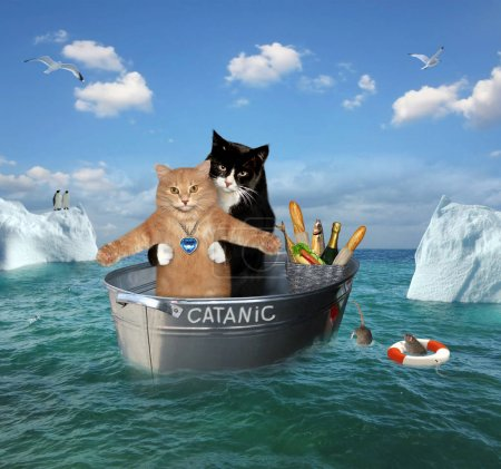 The two brave cats are drifting in the steel washt...