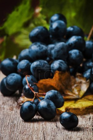 Blue wine grapes with vine and green leaves, rustic still life, vintage wooden background, selective focus
