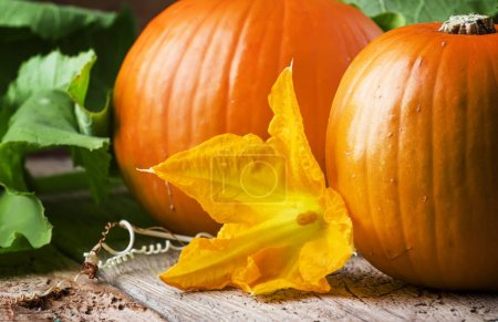Photo for Autumn harvest of pumpkins with flowers and leaves, old wooden table, still life in rustic style, selective focus - Royalty Free Image