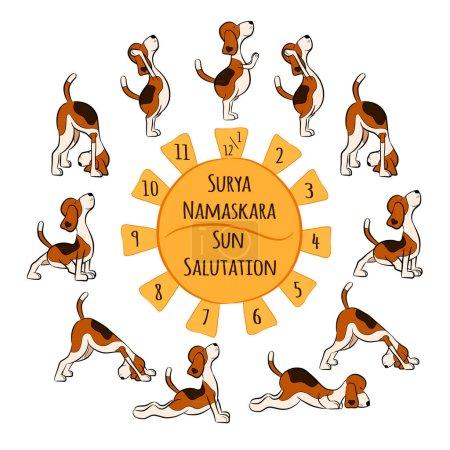 Isolated cartoon funny dog doing yoga position of Surya Namaskara. San Salutation. Beagle vector illustration