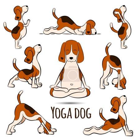 Isolated cartoon funny dog beagle doing yoga position. Surya Namaskara. San Salutation. Beagle vector illustration