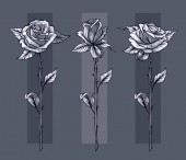 Graphic detailed graphic black and white roses flower with stem and leaves On gray background Vector icon set Vol 11