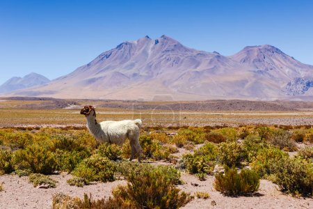 Photo pour Beau scénario dans le désert d'Atacama, nord du Chili, Amérique du Sud - image libre de droit