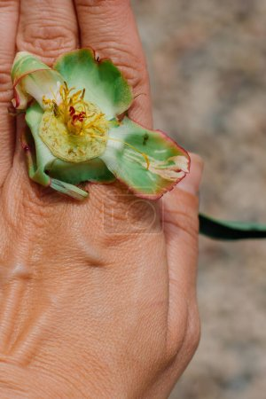 Photo for Hand holding flower in garden, close up shot - Royalty Free Image
