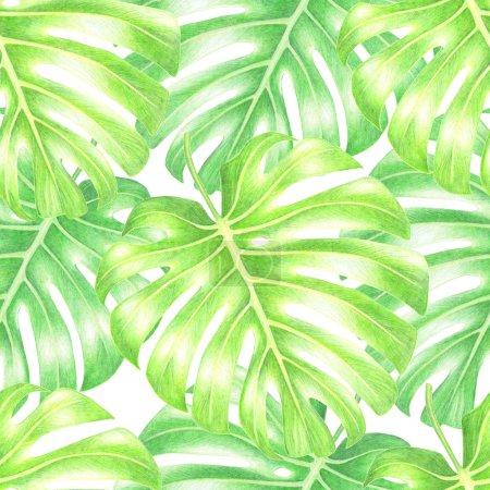 Photo pour Monstera vert aquarelle laisse transparente motif exotique sur fond blanc. - image libre de droit