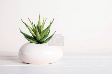 Photo pour Succulente, fleur artificielle, style moderne, fond blanc - image libre de droit