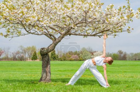Photo for Young woman is practicing yoga, doing Utthita Trikonasana exercise, extended triangle pose near blossom tree at the park. - Royalty Free Image