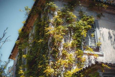 Photo pour Un beau coin d'une ancienne maison d'habitation abandonnée à Sintra, Portugal, envahie de lierre et d'autres plantes : murs plâtrés, vieilles fenêtres, toit carrelé, ciel clair et lumineux en arrière-plan - image libre de droit