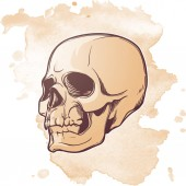Human Skull hand drawing Three quarters angle Linear drawing painted in 3 shades isolated on grunge textured background