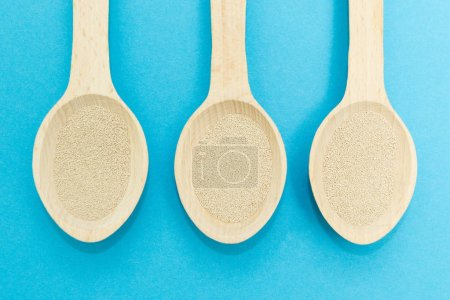 Three wooden spoons with instant dry yeast isolated on a blue background. Yeast is the main ingredient of fresh dough for pastry, pizza dough and many other dough.