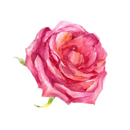 Photo pour Illustration aquarelle fleur rose rose sur fond blanc - image libre de droit