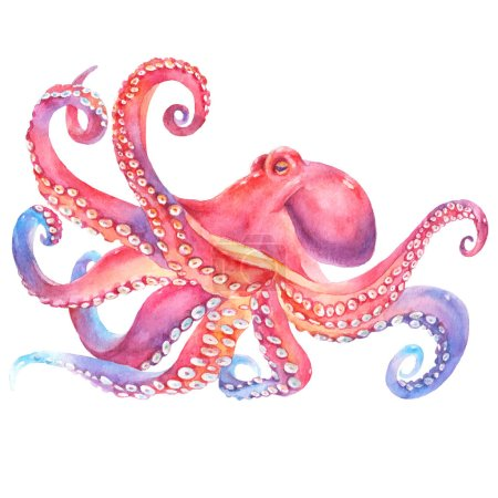 Watercolor octopus. sea poulpe, devilfish with ten...