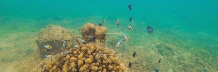 Photo pour Merveilleux et beau monde sous-marin avec des coraux et des poissons tropicaux. BANNER, format long - image libre de droit
