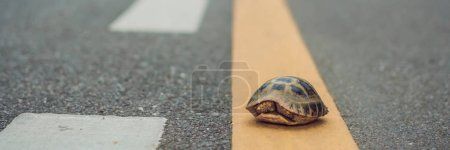 turtle walking down a track for running in a concept of racing or getting to a goal no matter how long it takes. BANNER, long format