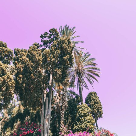 palm trees and pink sky. minimal and surreal. summer vacation
