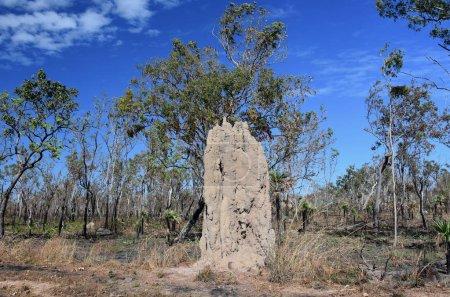 Photo pour Termitière géante (Nasutitermes triodae) dans la région de Mary River dans le Parc National de Kakadu, Northern Territory of Australia. - image libre de droit