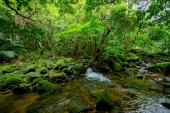 jungle in iriomote island