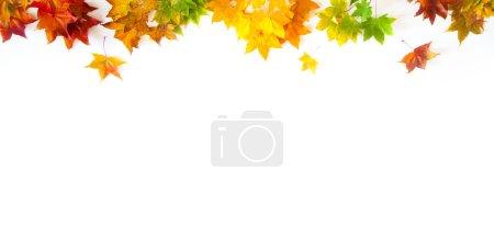 Photo pour Feuilles d'érable automne coloré - image libre de droit