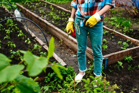 woman in gloves with secateurs standing in greenhouse