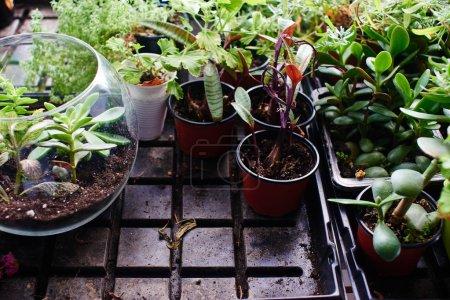 Photo pour Ensemble de jeunes pousses vertes dans le sol, gros plan - image libre de droit