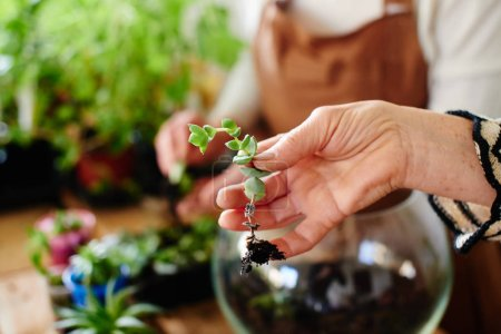 female florist in hand holding small plant, female hobby concept