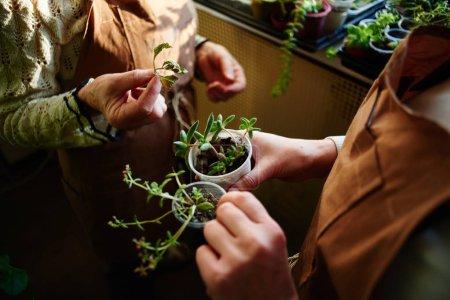 female hands holding small plants, concept of female botanic hobby