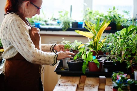 woman nerd florist caring for plants, female hobby concept