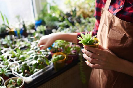 florist holding flowerpot with small plant, close-up