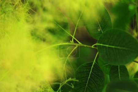 close-up of green plants, nature background