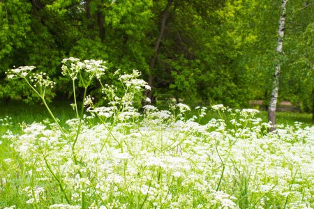 Green flowering grass in a forest. The sun shines brightly.