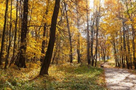 Photo pour Beaux arbres dans la forêt d'automne. Nature - image libre de droit