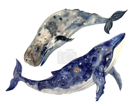 Photo pour Aquarelle baleine peinte à la main illustration isolée sur fond blanc. Esquisse de silhouette aquarelle animale. Illustration d'art dessinée à la main.Graphique pour tissu, tee-shirt, carte postale, carte de vœux, autocollant.Art animal sous-marin réaliste. - image libre de droit