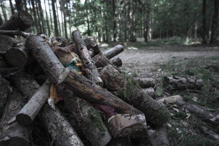 Photo pour Triste image avec un épouvantail abandonné dans les bois, enterré sous un tas de bûches, dans une forêt sombre et sinistre . - image libre de droit