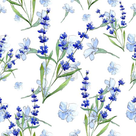 Photo for Blue lavender. Floral botanical flower. Wild spring leaf wildflower pattern in a watercolor style. Aquarelle wildflower for background, texture, wrapper pattern, frame or border. - Royalty Free Image