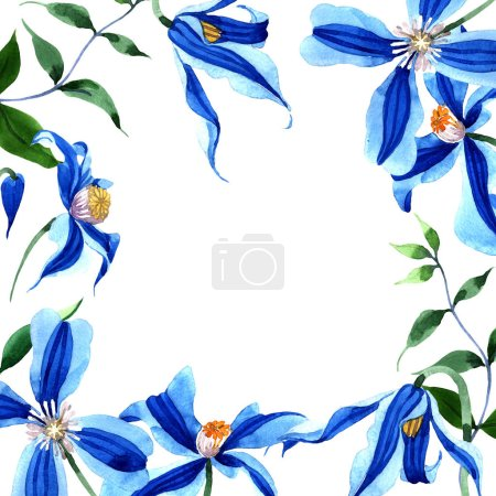 Blue durandii clematis. Floral botanical flower. Frame border ornament square.Aquarelle wildflower for background, texture, wrapper pattern, frame or border.