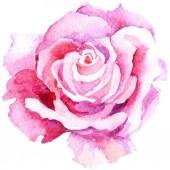 """Постер, картина, фотообои """"Нежная розовая роза. Ботанический цветочные цветок. Дикие весны листьев Уайлдфлауэр изолированы. Акварель Уайлдфлауэр для фона, текстуру, узор оболочки, рамки или границы"""""""