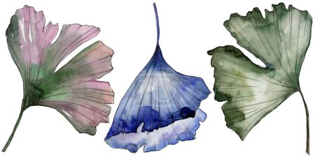 Ginkgo leaves in a watercolor style isolated. Aquarelle leaf for background, texture, wrapper pattern, frame or border.