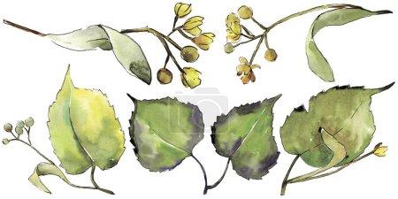 Photo pour Feuille de tilleul vert. Feuillage floral de jardin botanique de plante de feuille. Élément d'illustration isolé. Feuille Aquarelle pour fond, texture, motif d'emballage, cadre ou bordure . - image libre de droit